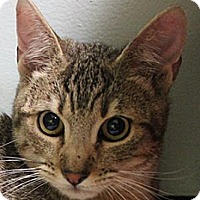 Adopt A Pet :: Fauvi - Morgan Hill, CA