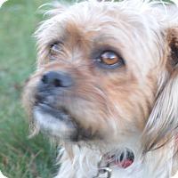 Adopt A Pet :: Mackie - Tumwater, WA