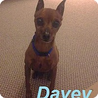 Adopt A Pet :: Davey - Adopted July 2015 - Huntsville, ON