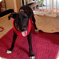 Adopt A Pet :: PENNY - Boca Raton, FL