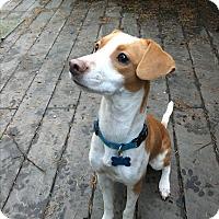 Adopt A Pet :: Karma - Gig Harbor, WA