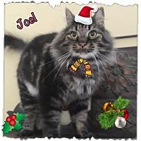 Adopt A Pet :: Joel - Harrisburg, NC