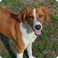 Adopt A Pet :: Nevada - Westport, CT