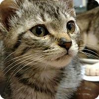 Adopt A Pet :: Brownie - Texarkana, AR