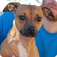 Adopt A Pet :: Catherine - Las Vegas, NV