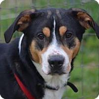 Adopt A Pet :: Clyde - Clifton, TX