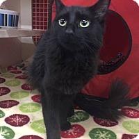 Adopt A Pet :: Ziva - LaGrange Park, IL