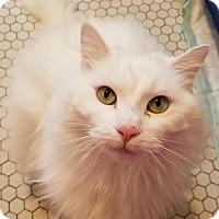 Adopt A Pet :: Cha-Cha - Jeannette, PA