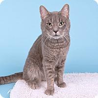 Adopt A Pet :: Kimmel - Wilmington, DE