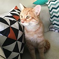 Adopt A Pet :: Alexx - Addison, IL