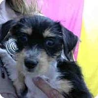 Adopt A Pet :: URGENT 5/23 @ DEVORE - San Bernardino, CA