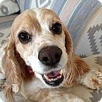 Adopt A Pet :: Crystal - Rancho Mirage, CA