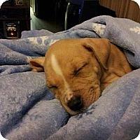 Adopt A Pet :: Wonder - Orlando, FL