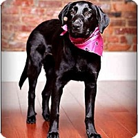 Adopt A Pet :: Shadow - Owensboro, KY