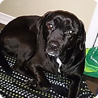 Adopt A Pet :: Karma - Montreal, QC