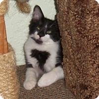 Adopt A Pet :: Furrari - Seminole, FL