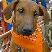 Adopt A Pet :: Milaya AVAILABLE AGAIN - Sacramento, CA