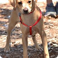 Adopt A Pet :: Spirit - Simi Valley, CA