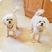 Adopt A Pet :: Sissy and Sassy - Kendall, NY