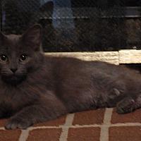 Adopt A Pet :: Rani - Speedway, IN