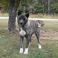 Adopt A Pet :: Tinshi - Silver Spring, MD