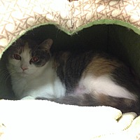 Adopt A Pet :: Melody - Byron Center, MI
