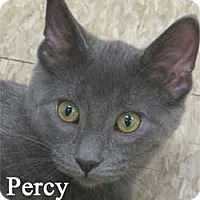 Adopt A Pet :: Percy - Warren, PA