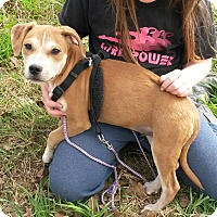 Adopt A Pet :: Gus - East Hartford, CT