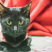 Adopt A Pet :: Athena - New Braunfels, TX