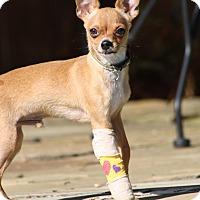 Adopt A Pet :: Elliot - Puppy - Dallas, TX