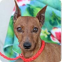 Adopt A Pet :: STEWIE - Red Bluff, CA