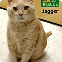 Adopt A Pet :: Jagger - Oakville, ON