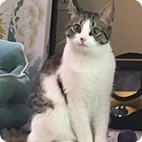 Adopt A Pet :: Mila - Marlborough, MA