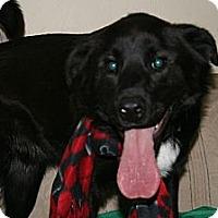 Adopt A Pet :: Patriot - Covington, KY