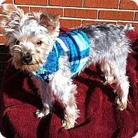 Adopt A Pet :: Hamilton - Ashland City, TN