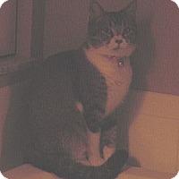 Adopt A Pet :: Maleigh - Franklin, NC