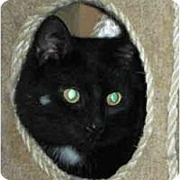 Adopt A Pet :: Shilo - Elmira, ON