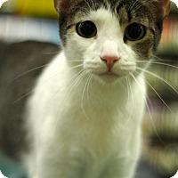 Adopt A Pet :: Corky - Sacramento, CA