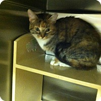 Adopt A Pet :: Emerald - Muncie, IN