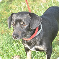 Adopt A Pet :: Lexi - Tumwater, WA