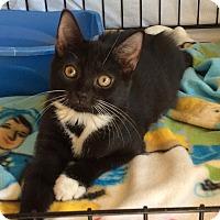 Adopt A Pet :: Spoty - Acme, PA