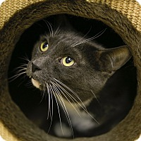 Adopt A Pet :: The Count - Germantown, OH