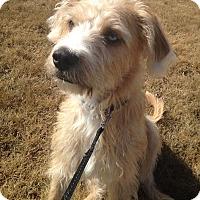 Adopt A Pet :: Blue (Sherlock) - Greensboro, GA