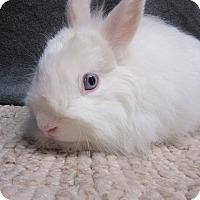 Adopt A Pet :: Koosh - Newport, DE