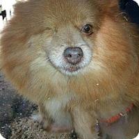 Adopt A Pet :: RAISIN - Longview, WA