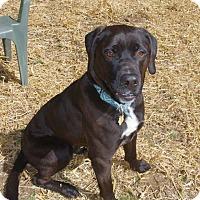 Adopt A Pet :: Reuben - Baltimore, MD