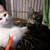 Adopt A Pet :: Louise and Thelma - South Bend, IN