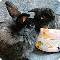 Adopt A Pet :: Peppermint Patty & Marcy - Newport, DE