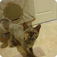Adopt A Pet :: Princess (declawed) - Beverly Hills, CA
