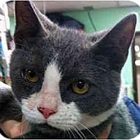 Adopt A Pet :: Candlewick - Secaucus, NJ